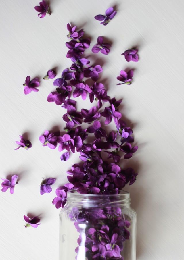 IMG_2580 viole